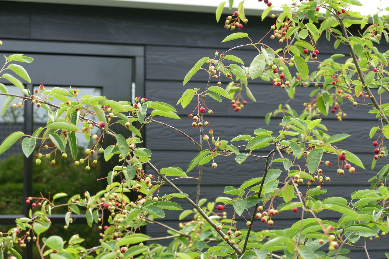 Door het toepassen van bijgebouwen is het ook op andere plekken in de tuin heerlijk vertoeven.