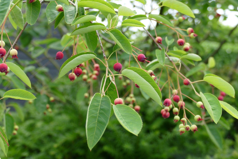 In onze gezellige en moderne tuinen gebruiken wij volle organische vormen van groenblijvende planten.