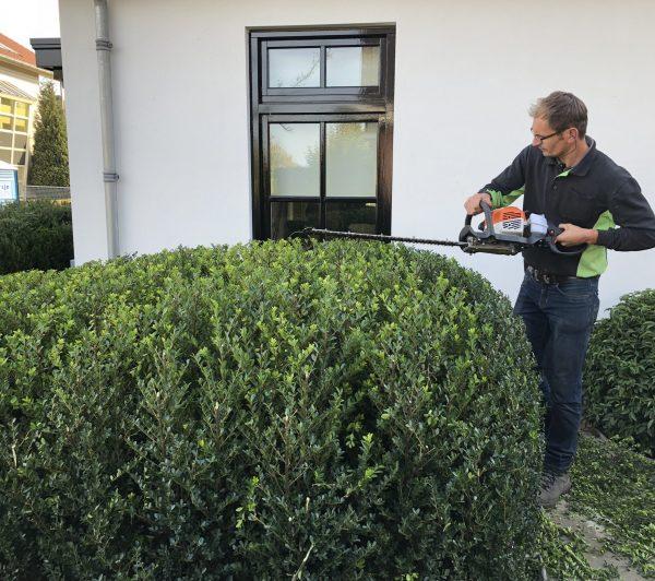 Onze organische vormen van groenblijvende planten zijn ook geschikt voor een kleine tuin.